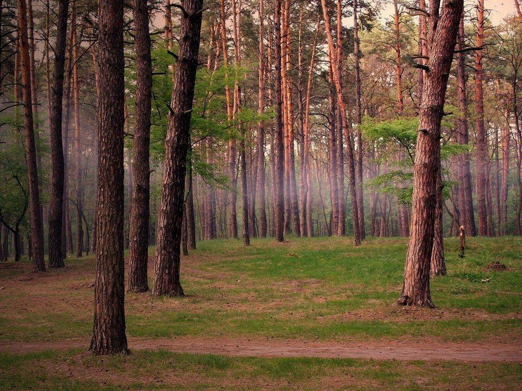 Влесу Южно-Сахалинска найдены два тупа вмашине