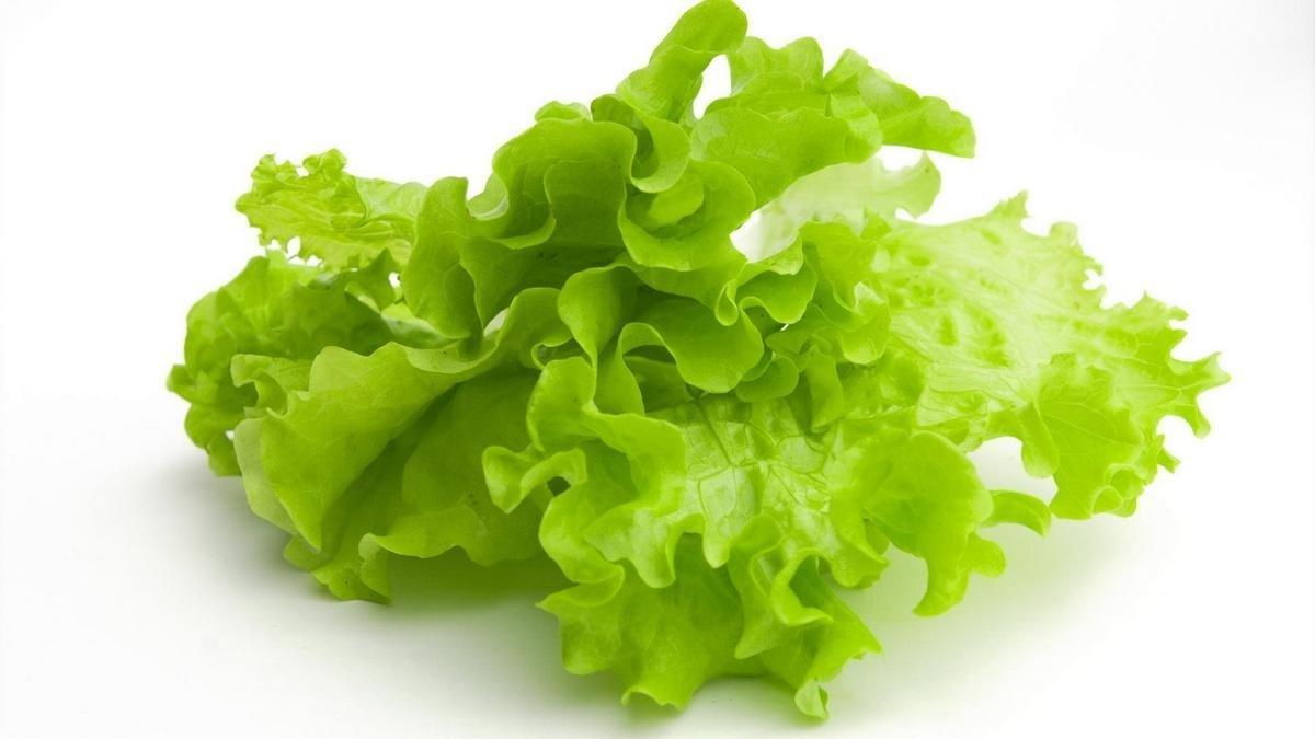 Тамбовский школьник вырастил салат новым методом и достиг интернационального принятия