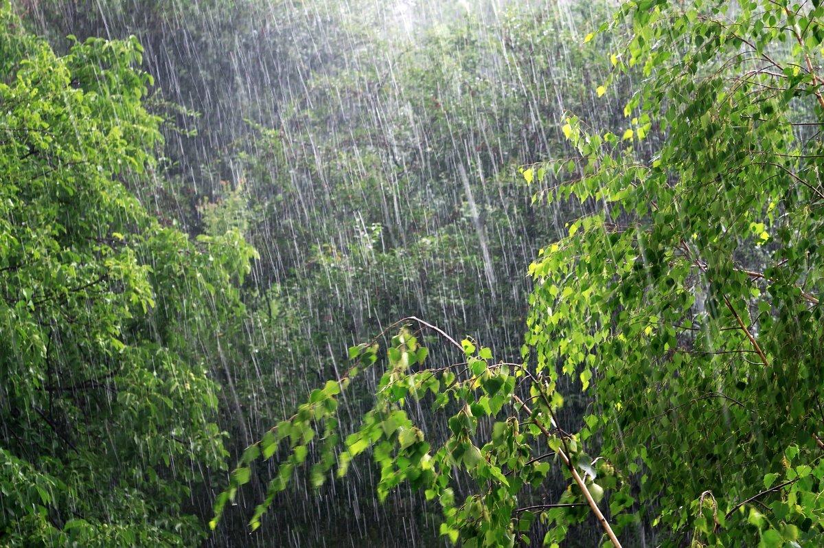 Синоптики прогнозируют похолодание кконцу июня вОмске