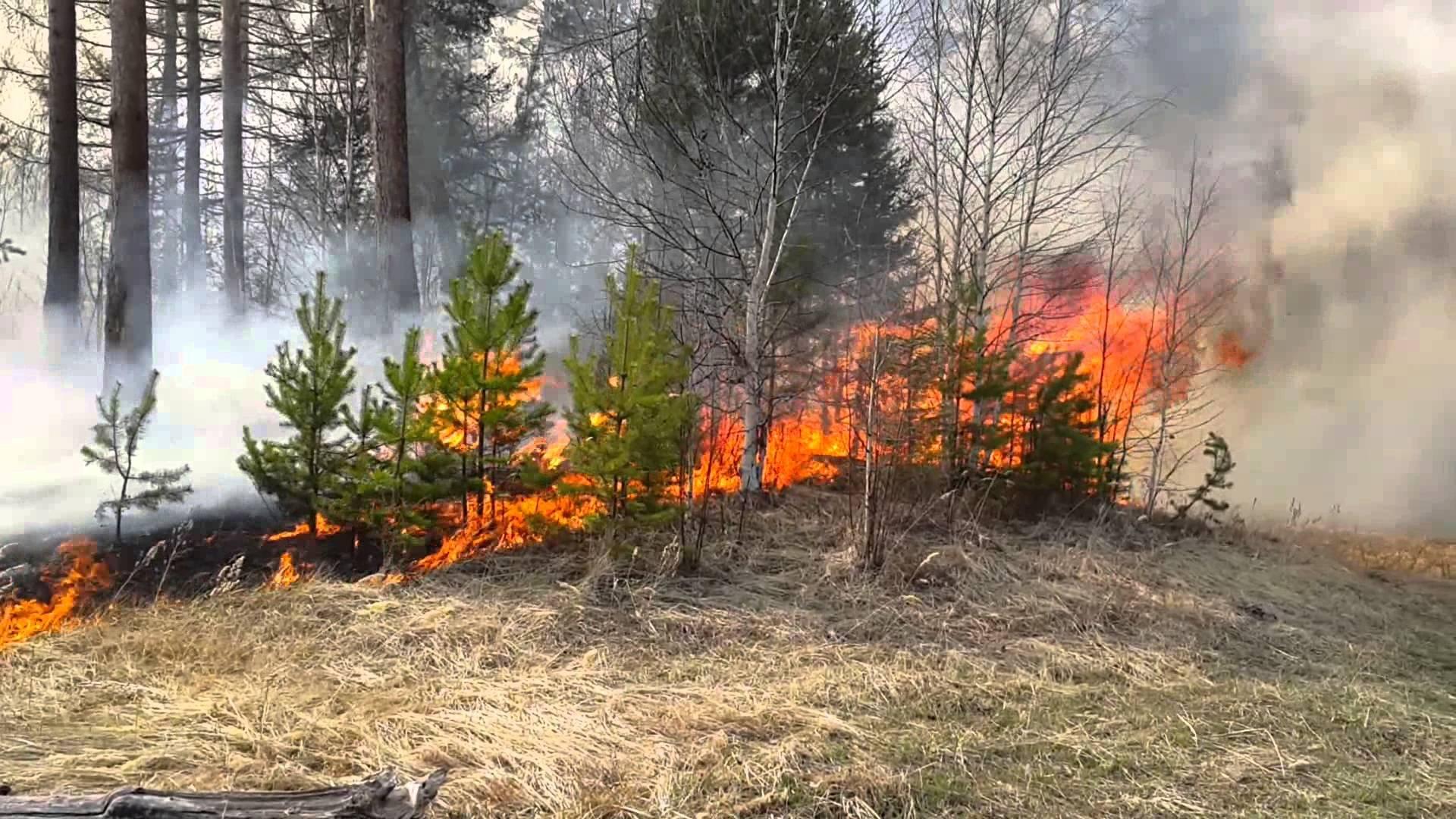 В 7-ми  районах Волгоградской области предполагается  высокая пожароопасность