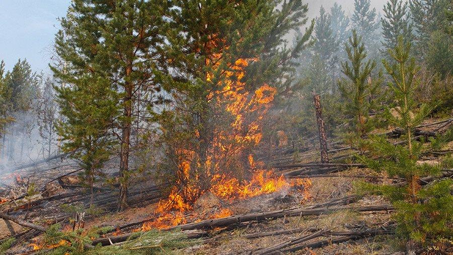 Желтый уровень опасности объявлен в столице из-за высокой вероятности пожаров