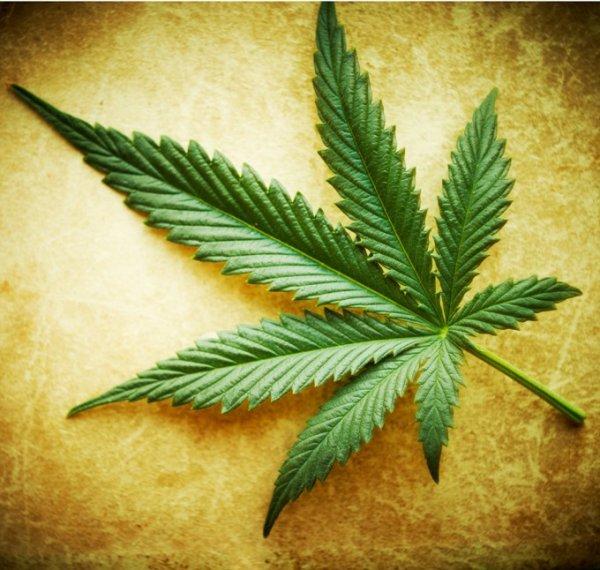 Ученые доказали, что марихуана делает человека раздраженным