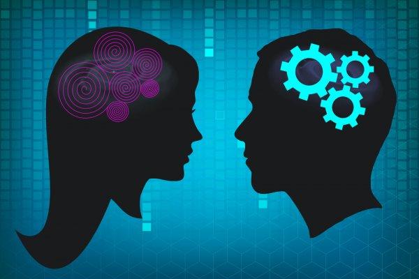Ученые нашли новые различия между женским и мужским мозгом