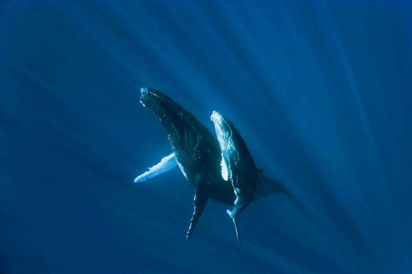 Слуховая «специализация» оказалась самым поздним приобретением китообразных