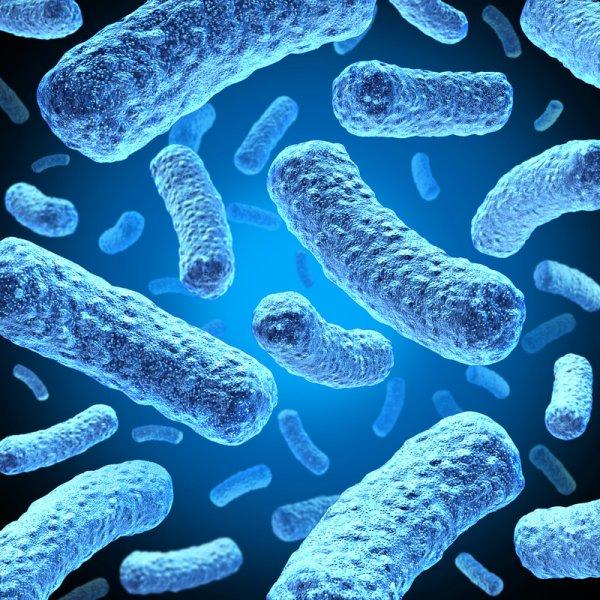 Ученые выявили неизвестные ранее особенности структуры в клетках бактерий