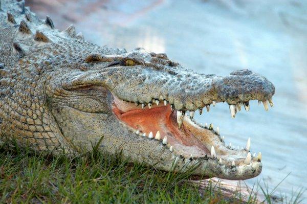 Ученые создали 3D-модель челюстей аллигатора