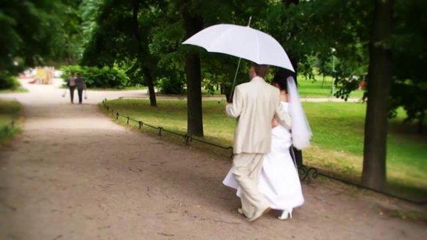 В Таврическом саду Петербурга на гостей свадьбы упало дерево