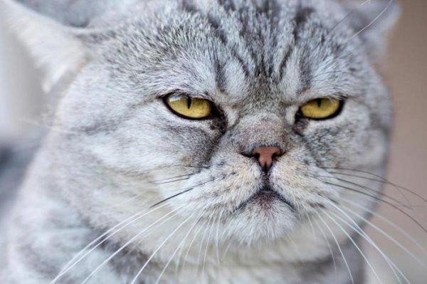 Ученые: Хвост расскажет, о чем думает кошка