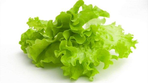 Ученик из Тамбова вырастил листья салата без земли