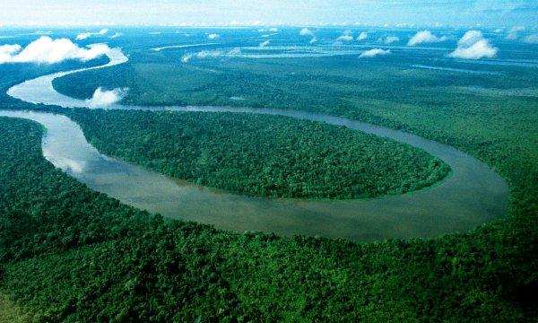 Басейн реки Амазонка находится на грани исчезновения