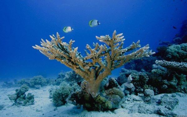 Ученые надеются с помощью кораллов найти лекарство от рака
