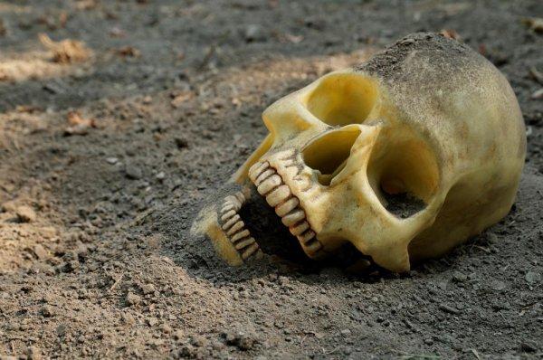 Антропологи реконструировали внешность человека, жившего 500 лет назад