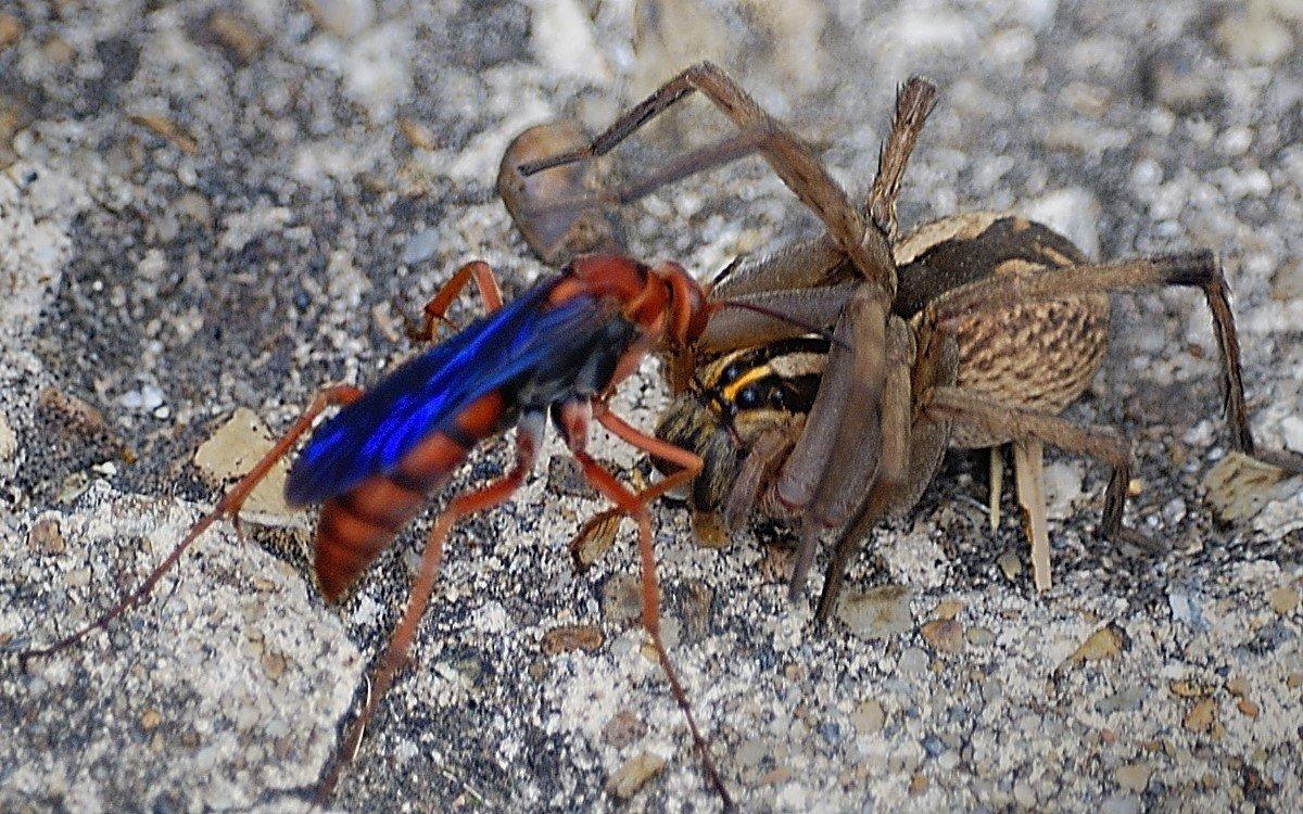 Ученые предупреждают, укус какого насекомого является самым опасным