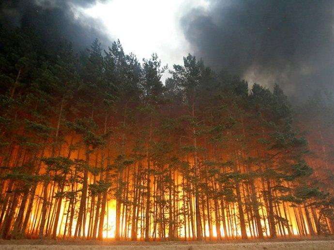 NASA Пожары в Сибири стали самыми масштабными за 10 тысяч лет