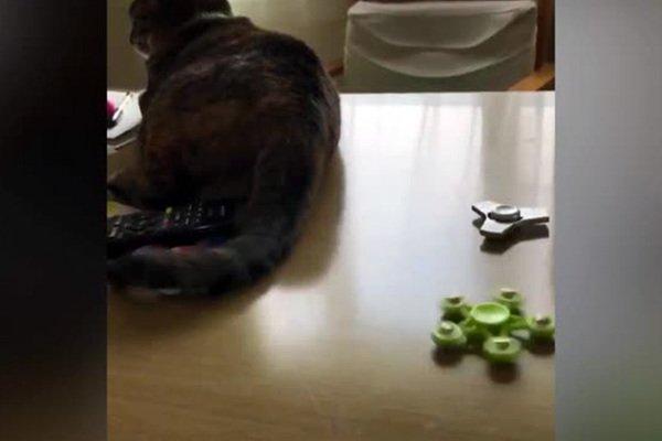 Японский кот научился крутить спиннер хвостом