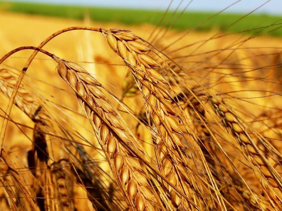 Аркадий Дворкович: РФ может увеличить производства зерна на30%