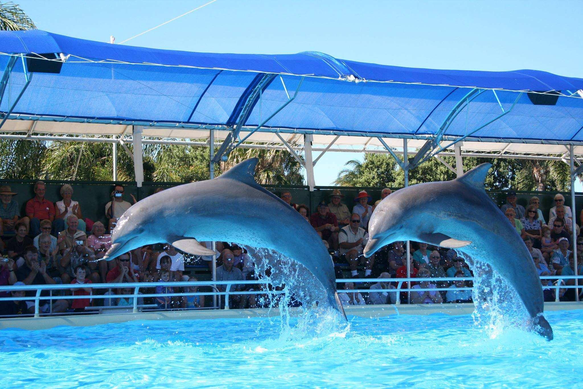 ВПриморском океанариуме умер третий дельфин-белобочка
