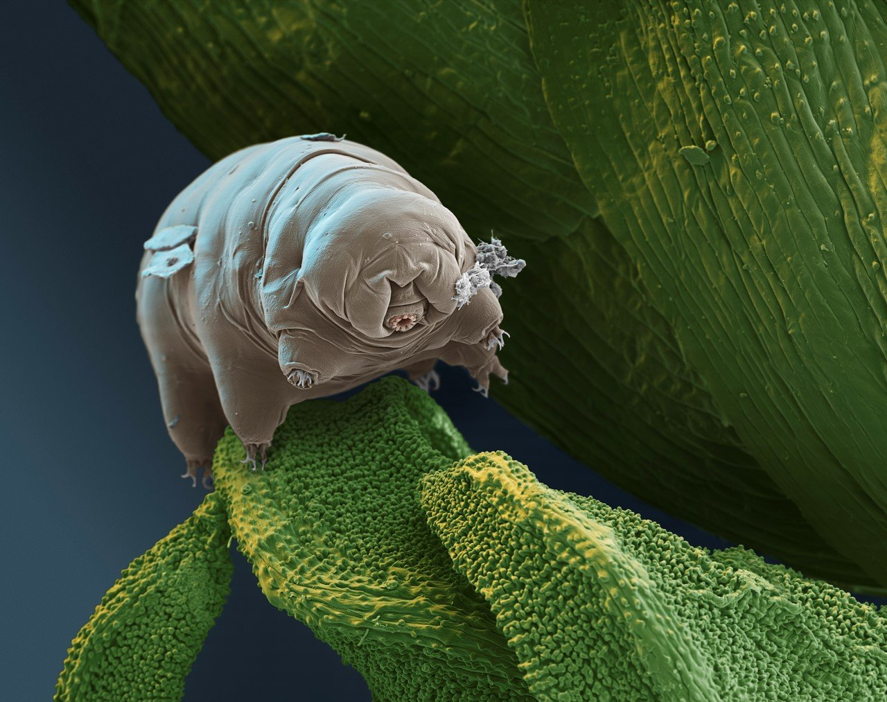 Ученые назвали организм, способный дожить до«конца света»
