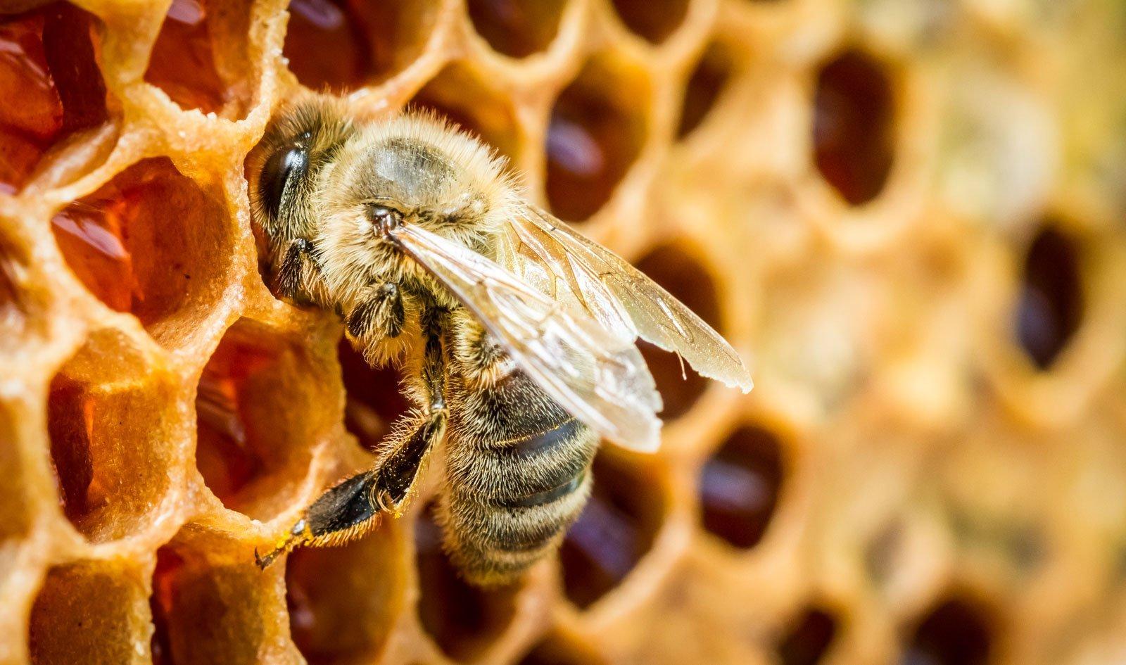 Холодное лето может привести к поднятию цен  нарязанский мёд