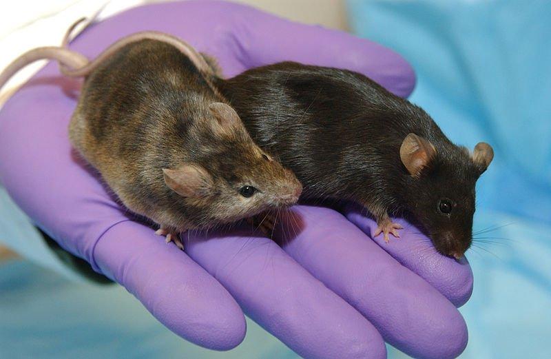 Ученые обнаружили генетические причины шизофрении