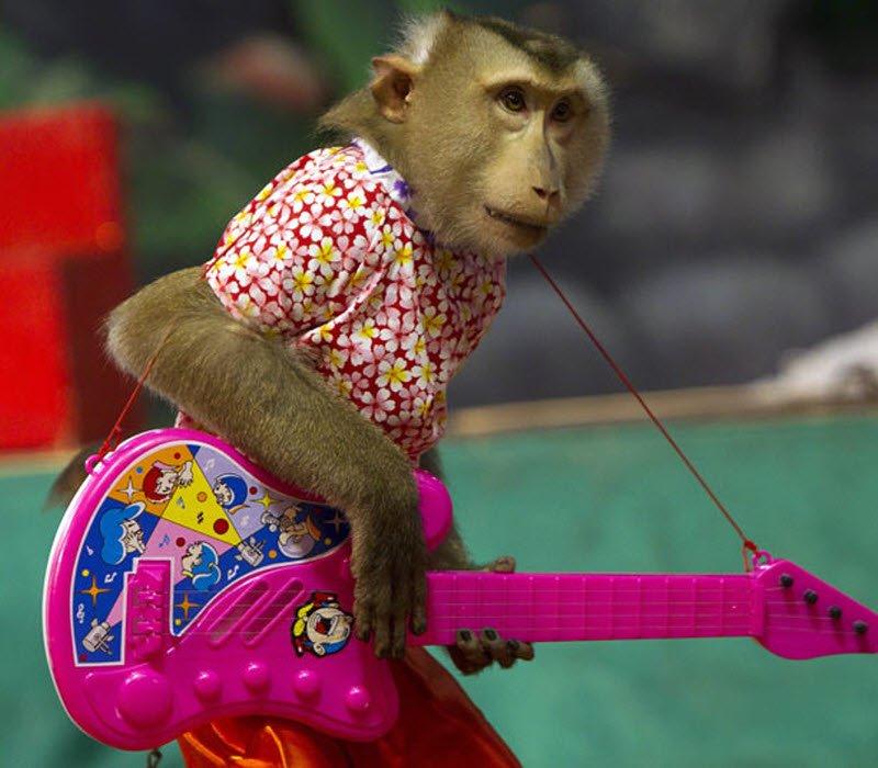 Кпоискам сбежавшей изрязанского цирка обезьяны подключили беспилотник исамолёт