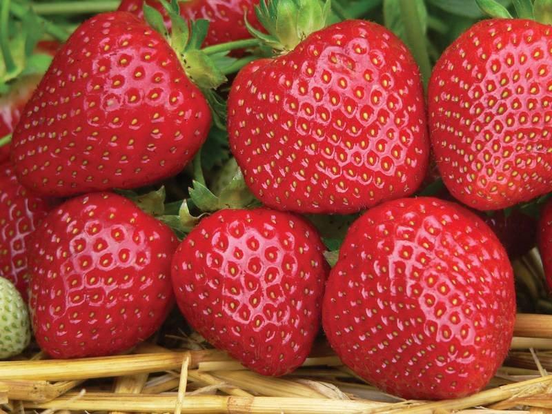 картинки про фрукты