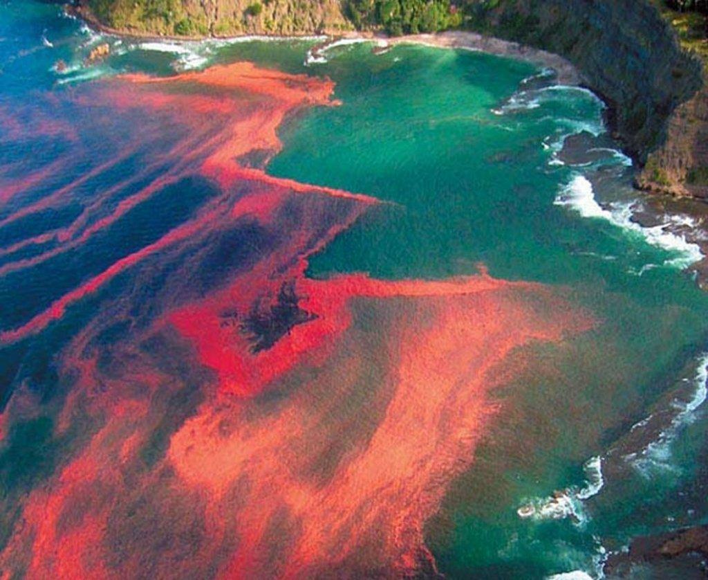 Ученые узнали, как можно предотвратить «кровавый» апокалипсис