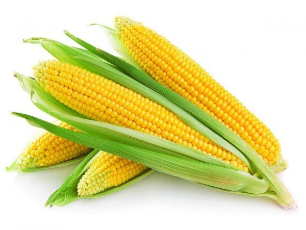В США произвели оружие для убийства личинок в виде кукурузы