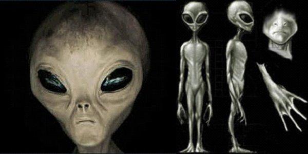 Ученые рассказали о внешности гуманоидных пришельцев