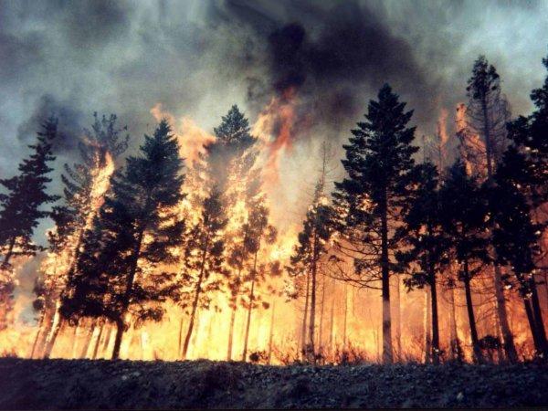 NASA опубликовала снимки многочисленных пожаров в Сибири