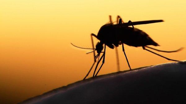 Ученые NASA ополчились на комаров
