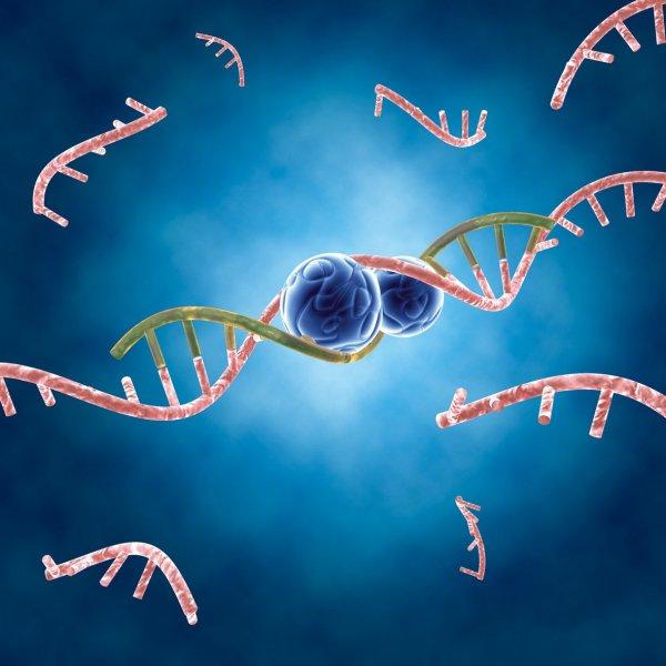 Ученые обнаружили микроРНК для развития регенеративной медицины