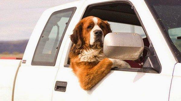 Беспилотные авто научаться не сбивать людей и животных на дорогах