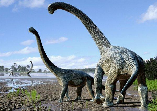 Динозавров убили растения и насекомые
