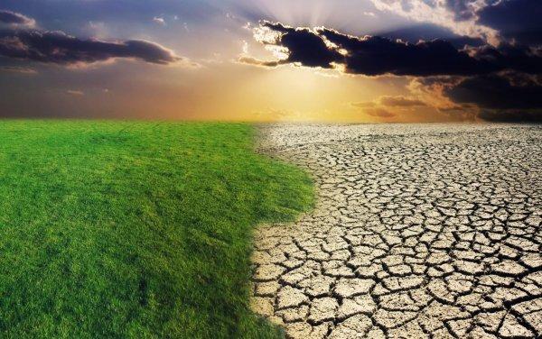 Ученые: Через десять лет Сахара превратиться в саванну