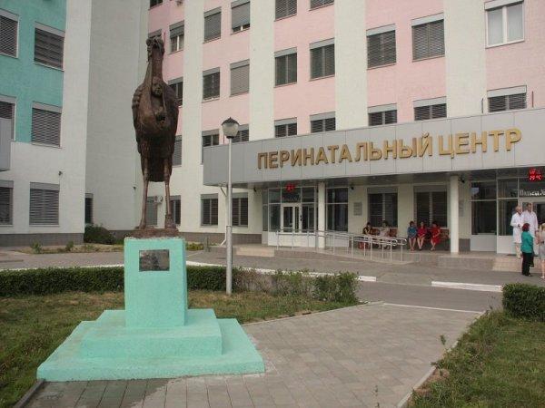 Перинатальный центр Волгограда подал заявку на покупку легкового авто