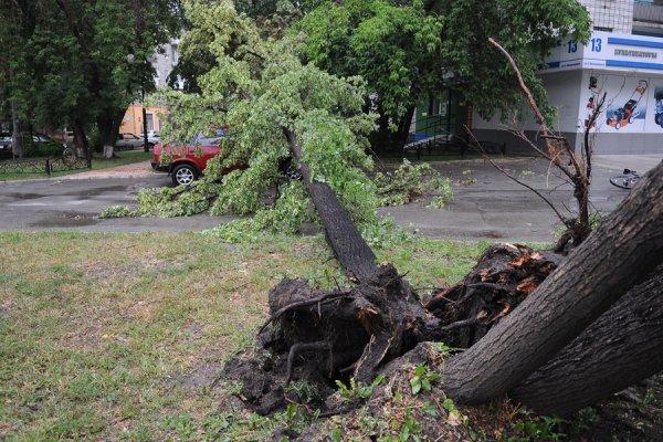 В Хакасии мощный ветер унес остановку и повалил деревья