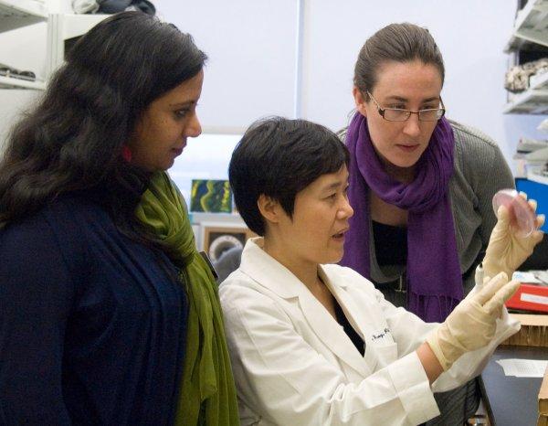 Ученые нашли способ защитить плод от вируса Зика
