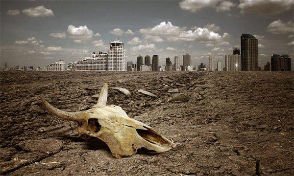 Ученые рассказали о массовом вымирании целых видов животных