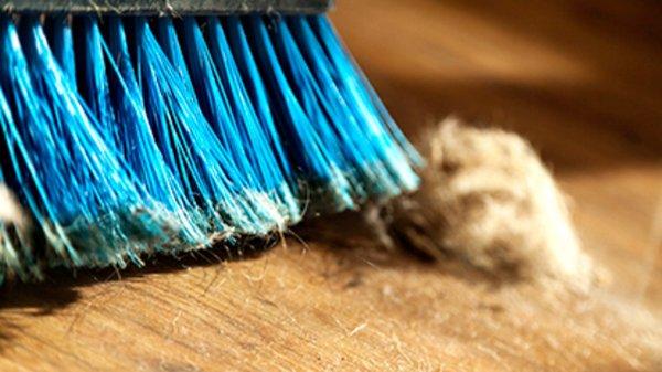 Ученые уверены, что домашняя пыль может вызвать ожирение