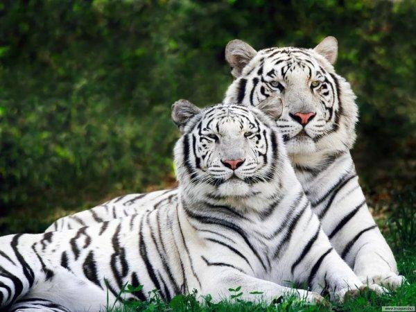 Ученые предупредили о массовом вымирании животных