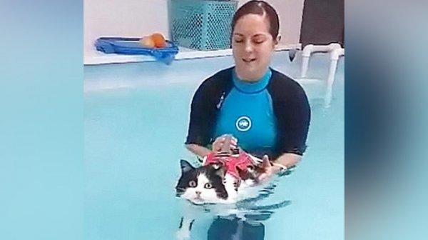 Десятикилограммовую кошку Мишу ветеринары заставили учиться плавать