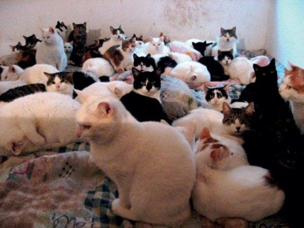 Пенсионерка из Оренбурга заперла в квартире 10 кошек и уехала на дачу
