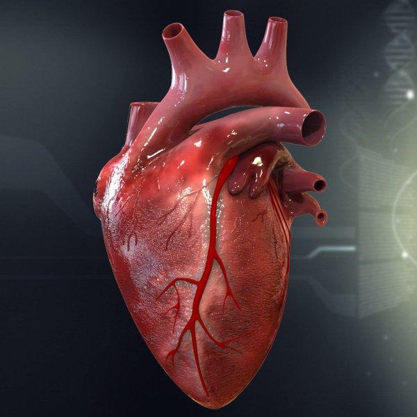 Ученые из Новосибирска создали искусственное сердце-насос
