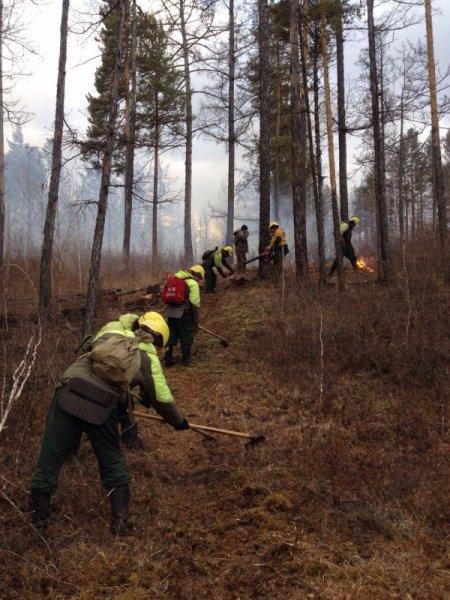 Леса Ленинградской области защитят с помощью мобильного приложения
