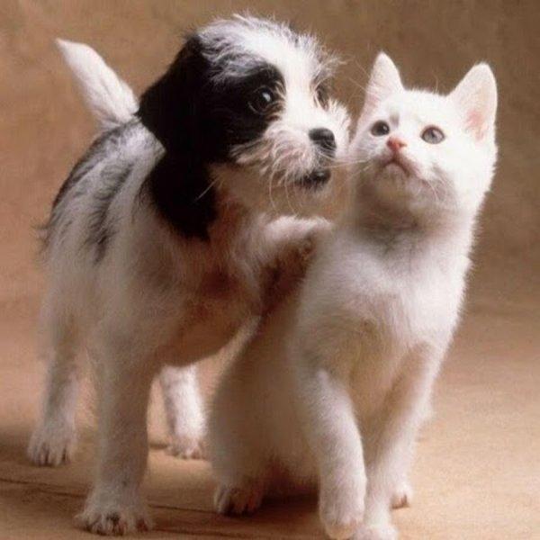 На Amаzon появится переводчик для домашних животных