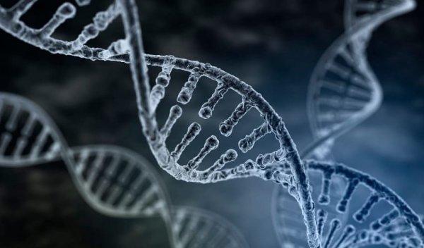 Ученые намерены разработать хромосомную терапию для лечения умственной отсталости