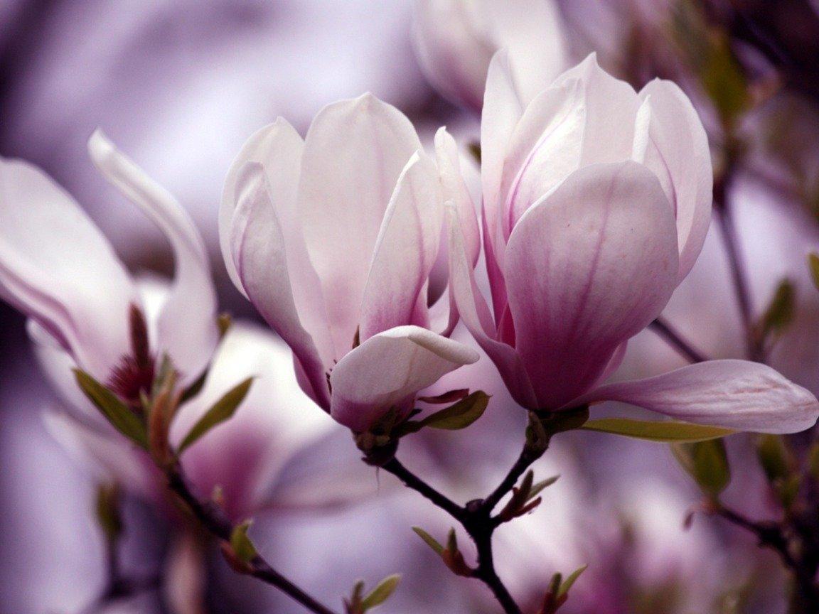 Биологи узнали, как выглядел 1-ый цветок Земли