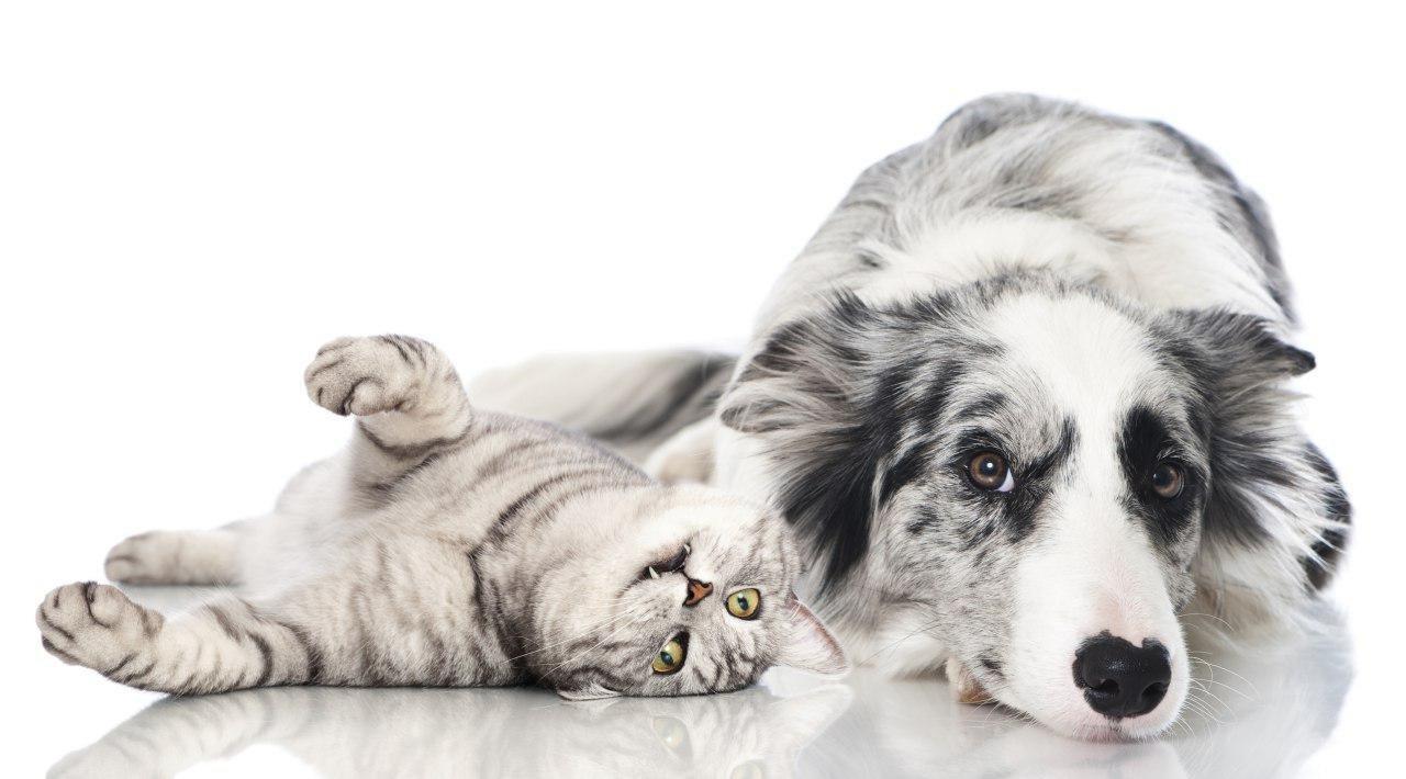 Ученый сказал про вклад кошек исобак вглобальное потепление