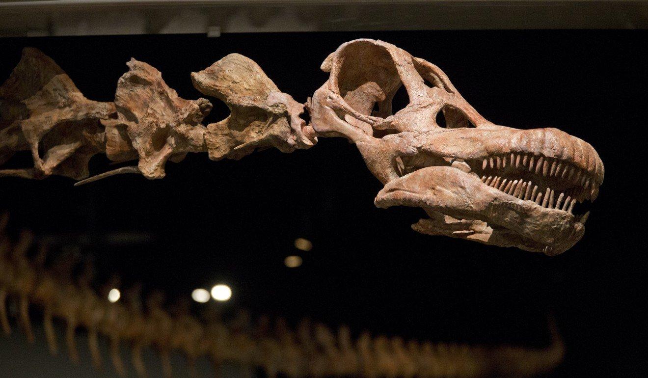 Найдены останки самого огромного вмире динозавра